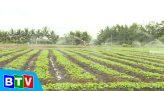 Nông vụ Bình Thuận   25.12.2020